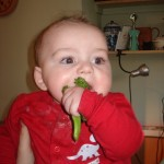 Coriander's baby Jack does a bit of damage to some broccoli