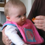 Babybear at 6 months eyeing up an apricot